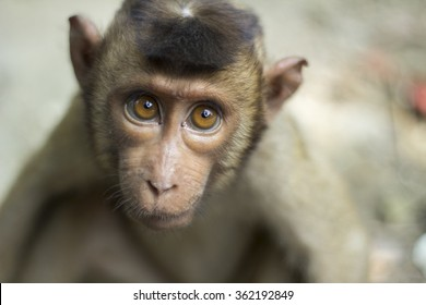 Isolated monkey look straight with big eyes