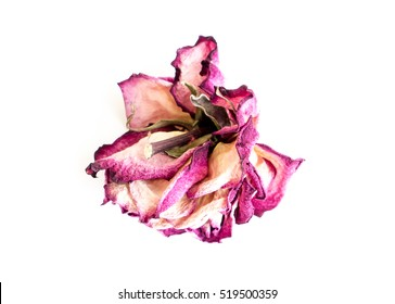 The isolated nature dried rose.