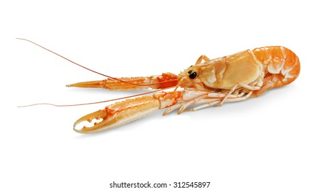isolated Nephrops norvegicus Scampo on white plane