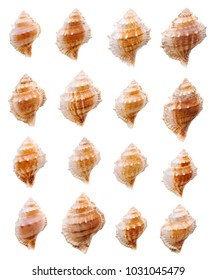 Isolated objects: collection of empty sea shells on white background