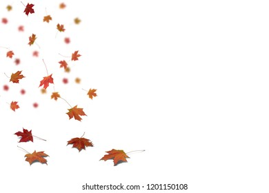 Isolated on white background of Autumn leaves on the floor with shadow and some are falling.