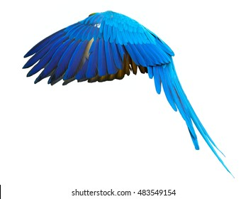 Isolated on white background, Blue-and-yellow macaw, Ara ararauna, vibrant blue and yellow parrot flying, otstretched wings and tail.