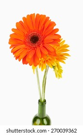 Isolated on white background flower yellow gerbera