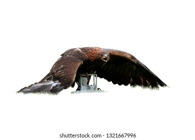 Isolated on white background, Golden eagle, Aquila chrysaetos with drone quadcopter in claws. Falconry training for airfield protection against drones. Drone hunter, white copter catched by eagle.