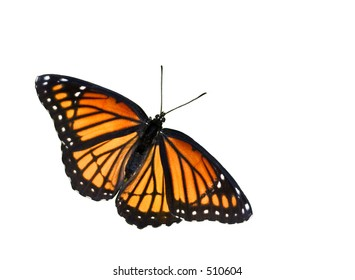 isolated on white background orange butterfly
