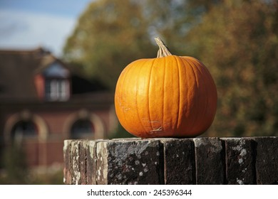Isolated orange pumpkin sat on a wall in garden with a warm autumnal background.