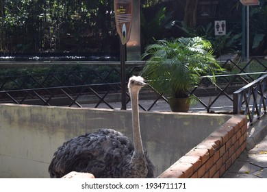 isolated ostrich bird in the zoo