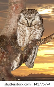 Isolated Owl on the sunset yellow background