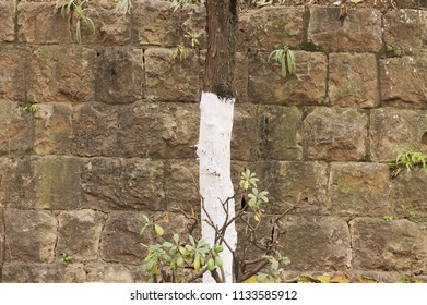Isolated painted tree and brick wall background (Kunming, Yunnan, China)