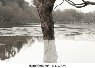 Isolated painted tree in the Green Lake (Kunming, Yunnan, China)