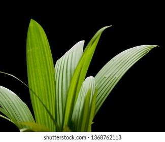 Isolated palm leafs.. Transparent background..  changeable background, foreground