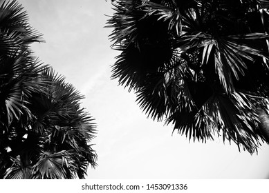 Isolated palm tree leaves with sky background photo