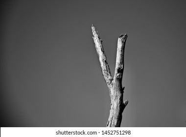 Isolated parts of a dead tree unique black and white photo