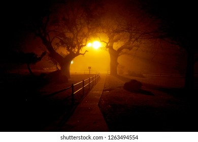 An isolated path dimly lit by a street lamp in the fog.  Silhouette of oak trees and rocks.