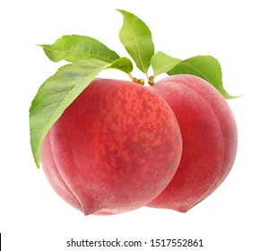isolated peaches. Two pink peach fruits hanging on a branch isolated on white background with clipping path