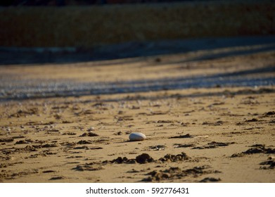 Isolated pebble on the beach