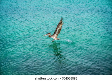 Isolated Pelican Flying. Pelican Silhouette Wings Above Blue Sea. Crossing Crystal Ocean. Blue Sky Bird. Isolated Wallpaper. Flying White Pelican. Blue Tropical Landscape. Brown Pelican Background