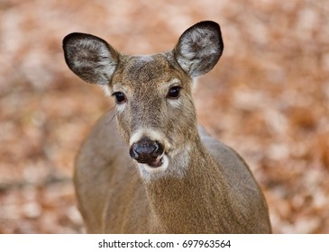 Isolated photo of a cute wild deer in forest