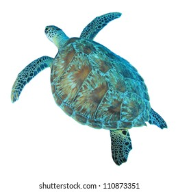Isolated photo of Green Sea Turtle from above