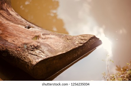 Isolated piece of a wooden object in the water unique photo