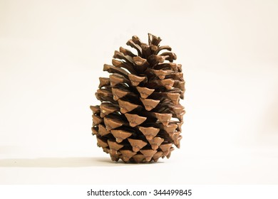 Isolated pine cone.