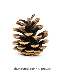 Isolated pine cone