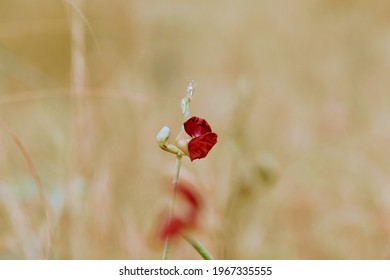 Isolated plant in the middle of a thicket, with small flower of red color that contrasts with the surrounding vegetation. Between the vegetation and the flower in focus, reddish shadows appear.