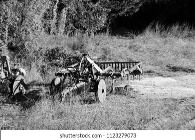 Isolated plow in the wood (Pesaro, Italy)