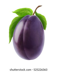 Isolated plum. One blue plum fruit on a stem with leaves isolated on white background with clipping path