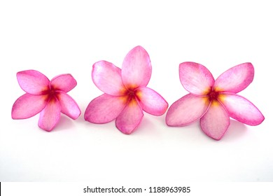 Isolated plumeria flowers on the white background. It is the collection of flowers. It is beauty.