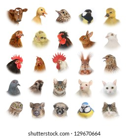 isolated portraits of animals and birds