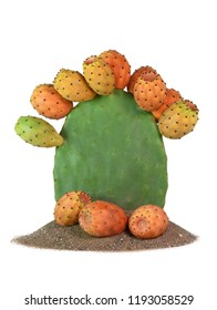 isolated prickly pear cactus full fruit  plant on sand with figs on the base vertical with copy space on subject.