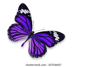 Isolated purple butterfly on white background
