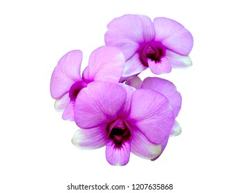 Isolated purple orchid on white background