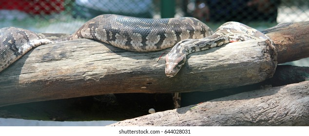 isolated python
