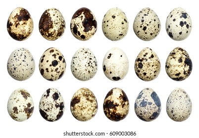 Isolated quail eggs. Big collection of quail eggs isolated on white background with clipping path