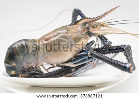 Isolated Raw Fresh Jumbo Shrimp On Stock Photo Edit Now 376887121