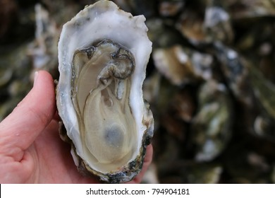 Isolated Raw Oyster