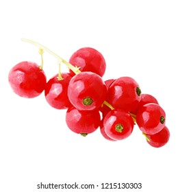Isolated red currant fruits on white background with clipping path as package design element and advertising