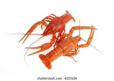 isolated red lobster