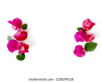 Isolated of red pink bougainvillea, red flowers with green leafs, pink red Bougainvillea flower on white background, pink blossom element isolated