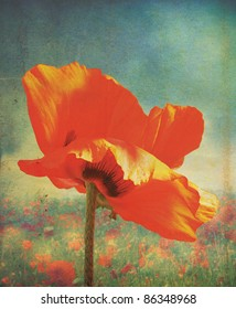 An isolated red poppy head and stem, with a grunge style effect applied over a poppie field and set on a portrait format.