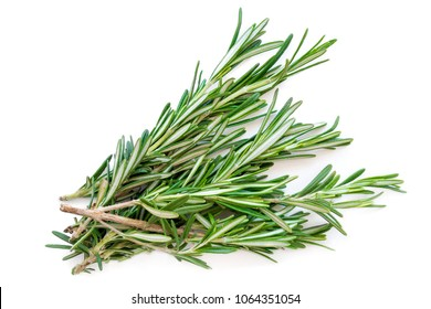 Isolated Rosemary herb. Fresh green rosemary bunch isolated on a white background. Top view. Flat lay