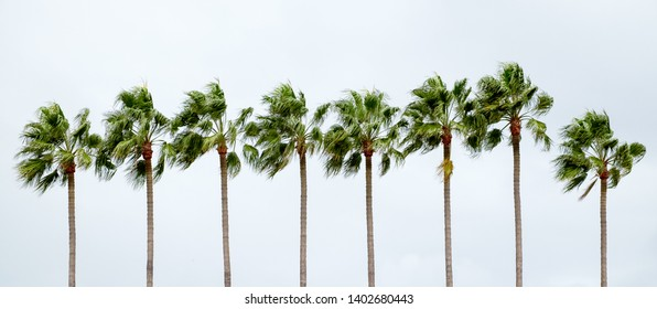 Isolated row of palm trees in vivid colors  with an overcast blue sky in the background