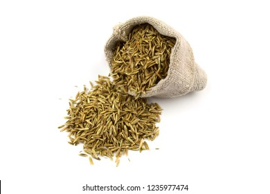 Isolated Ryegrass Seeds (Lolium) in a Sack Bag.