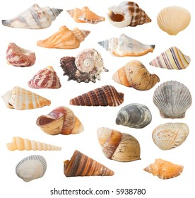 Isolated Seashells Collection (22 in total).