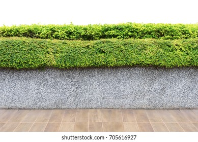 Isolated of set of floor, concrete wall and green plant. Use for decorate in garden or park outdoor.