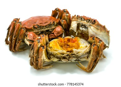 Isolated Shanghai Chinese hairy crab, mitten crab steamed, autumn winter December season