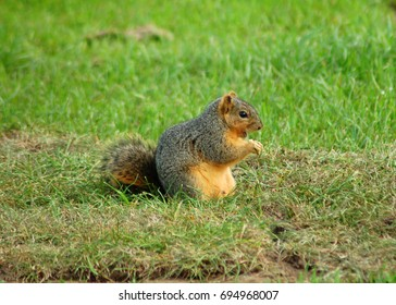 an isolated shot of a squirrel rodent animal in a forest