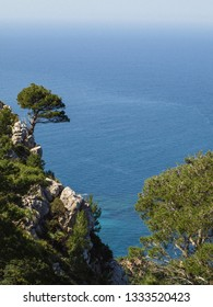 Isolated single tree on a rock of a mountain overlooking the mediterranean sea of Majorca with greens in the foreground and the blue sea and sky in the background.